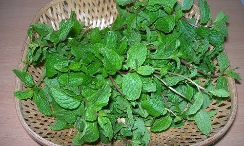 Mint Leaves - Pudina Bhaji