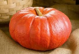 Pumpkin Red - Petha /Bhopla