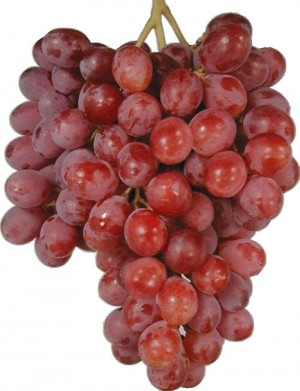 Grapes - Red (Globe)